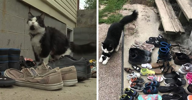 neighborhood cat steals shoes thief burglar cats funny lol feline viral aww cute hilarious animals jordan facebook viral