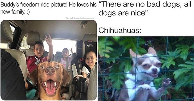 dogs doggo memes funny lol aww cute adorable animals doggos dog wholesome uplifting | Buddy's freedom ride picture! He loves his new family | There are no bad dogs, all dogs are nice Chihuahuas: