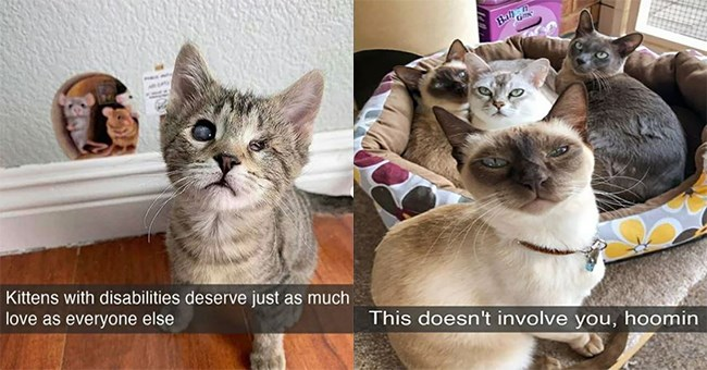 cats snaps cat snapchat funny lol aww cute adorable animals kittens kitties wholesome uplifting | Kittens with disabilities deserve just as much love as everyone else | This doesn't involve hoomin group of cats