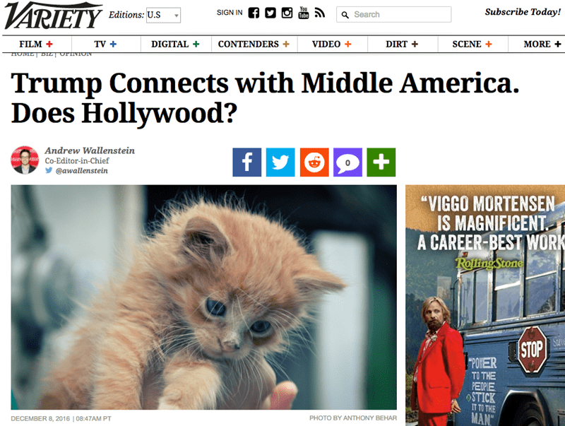 donald trump kitten chrome extension