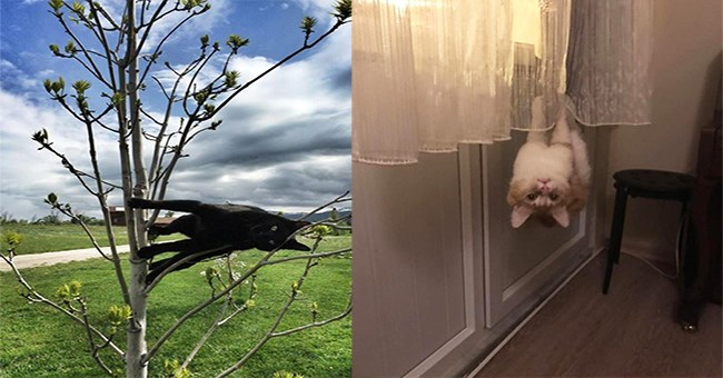 Two funny photos side by side of cats that very much seems to defy physics and are chilling in thin air.