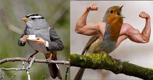 funny photoshops and edits of birds with human arms | office bird holding a mug | buff bird flexing muscular arms