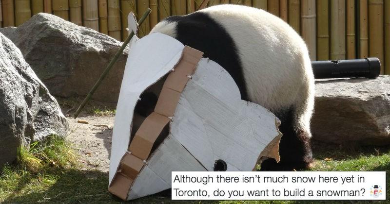 toronto panda snow snowman zoo - 1232133
