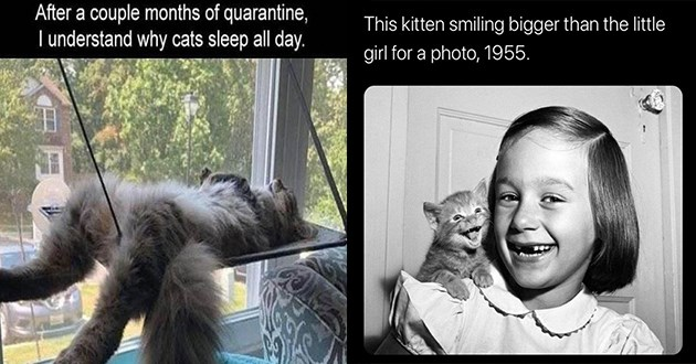 caturday funny cat memes cats aww lol wholesome pics adorable animals meme | After couple months quarantine understand why cats sleep all day. cat chilling lying on its back on a cat shelf hanging from a window | This kitten smiling bigger than little girl photo, 1955.