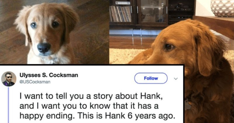A heroic dog ends up saving his family from a fire | Ulysses S. Cocksman Follow @USCocksman want tell story about Hank, and want know has happy ending. This is Hank 6 years ago.