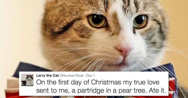 christmas,twitter,UK,Cats,12 days of christmas