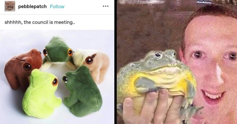 Funny memes about frogs | pebblepatch Follow shhhhh council is meeting.. frog stuffed toy plushies in a circle | Mark Zuckerberg holding a large frog