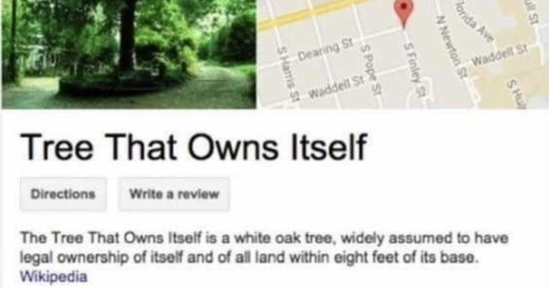 A funny Tumblr thread on a tree that owns itself | Reese St Dearing St Waddell St Waddeil St Tree Owns Itself Directions Write review Tree Owns Itself is white oak tree, widely assumed have legal ownership itself and all land within eight feet its base. Wikipedia Address: South Finley Street, Athens, GA 30605, United States Reviews 4.3 6 Google reviews SHull St SHu Florida Ave N Newton St on St S Finley St e St S Pope St N Church St SHamis St