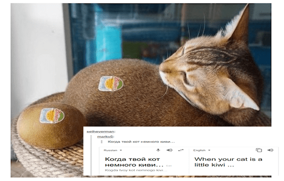 A funny thumbnail for a list of cat tumblr posts written in Russian but then translated to english making them very funny, the cover photo shows a cat with a sticker on it and it's looking at a kiwi with the same sticker and they basically look the same | setheverman: markv5 Russian English cat is little kiwi Kogda tvoy kot nemnogo kivi.