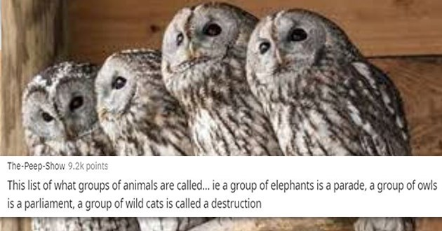 names animals groups funny lol thread reddit askreddit facts interesting animal nouns | Peep-Show This list groups animals are called iea group elephants is parade group owls is parliament group wild cats is called destruction