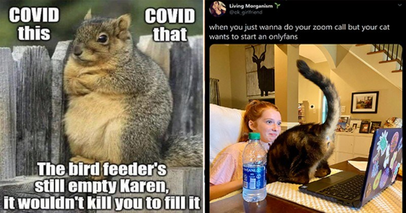animals memes dump funny lol cute aww animal cats meme wednesday hump day | COVID this COVID bird feeder's still empty Karen wouldn't kill fill squirrel crossing its arms in front of its chest | Living Morganism Y @ok_girlfriend just wanna do zoom call but cat wants start an onlyfans DASANL 100% cat showing its butt to the laptop camera
