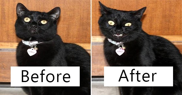 cats dogs compliment reaction lol funny humor animals cute aww animal pets photos pics | before and after pics of a black cat making a funny face