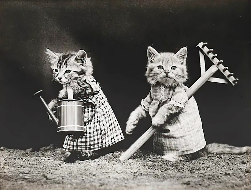 vintage cat memes cute cats kittens meme history 1900 lolcats amazing interesting cool aww | black and white photograph of two farmer kittens holding a rake and a watering can