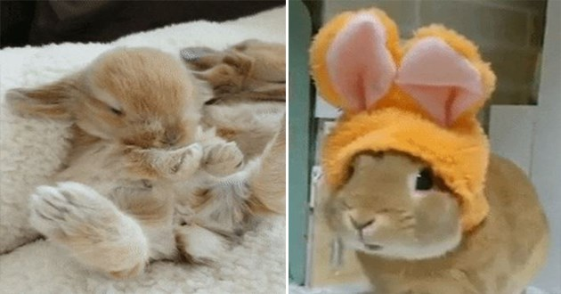 bunnies bunny gifs cute aww adorable animals gifs rabbits rabbit funny baby | sweet little bunny wearing fake bunny ears on its head | baby bun lying on its back stretching its feet