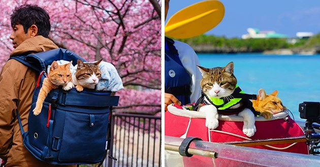 instagram spotlight traveling cats japan goals aww cute beautiful travel animals cat | adorable pic of two cats sitting in the backpack of a man walking through blossoming cherry trees | two cats in life jackets on a boat