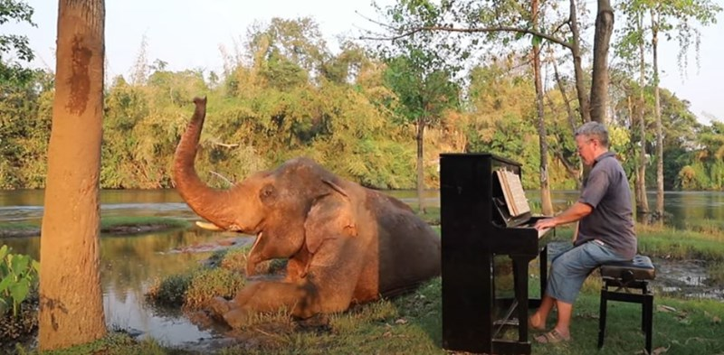blind elephants classical music old ailing elephant sanctuary animals thailand piano pianist paul barton beautiful youtube video