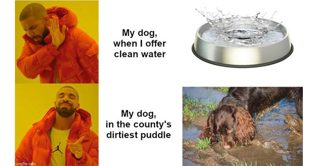 doggo dogs meme funny lol aww cute animals wholesome doggos memes | My dog offer clean water My dog county's dirtiest puddle imgflip.com Drakeposting