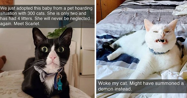 cat snaps cats snapchat animals lol funny cute aww wholesome uplifting adorable | just adopted this baby pet hoarding situation with 300 cats. She is only two and has had 4 litters. She will never be neglected again. Meet Scarlet | Woke my cat. Might have summoned demon instead.