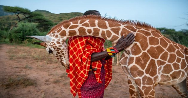 1000 words animals photography nature amazing beautiful funny interesting crazy pics emotion | giraffe bending down to hug a person by resting its neck on their shoulder