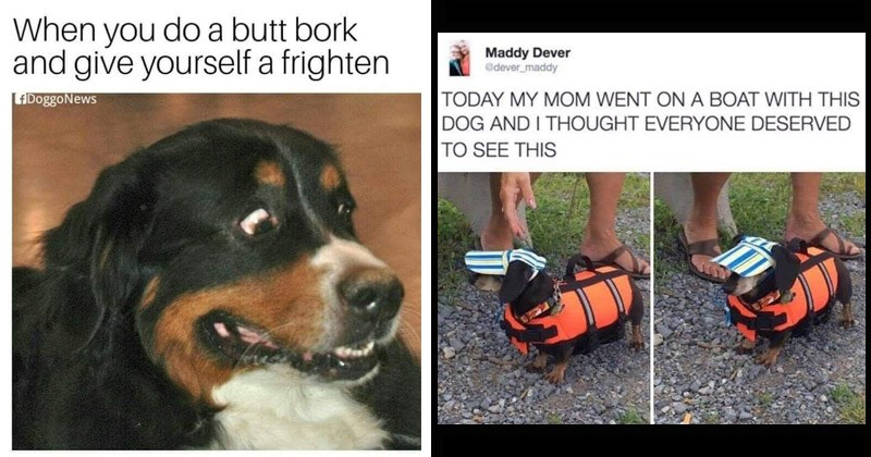 Funny memes about dogs for National Dog Day | do butt bork and give yourself frighten LADoggoNews scared dog | Maddy Dever Gdever maddy TODAY MY MOM WENT ON BOAT WITH THIS DOG AND THOUGHT EVERYONE DESERVED SEE THIS wiener dog in a life jacket