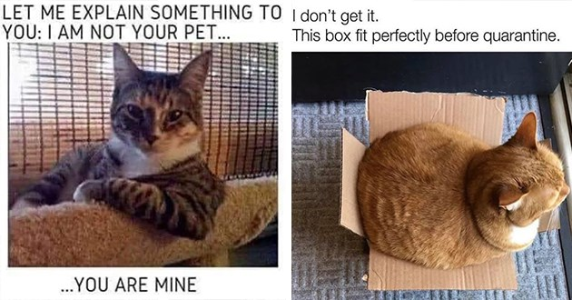 caturday cat memes funny cats meme lol humor hilarious animals adorable cute aww wholesome | LET EXPLAIN SOMETHING AM NOT PET ARE MINE | don't get This box fit perfectly before quarantine. big chonky cat struggling to fit in a cardboard box
