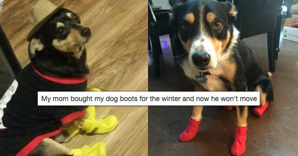 shoes dogs twitter boots funny - 1238021