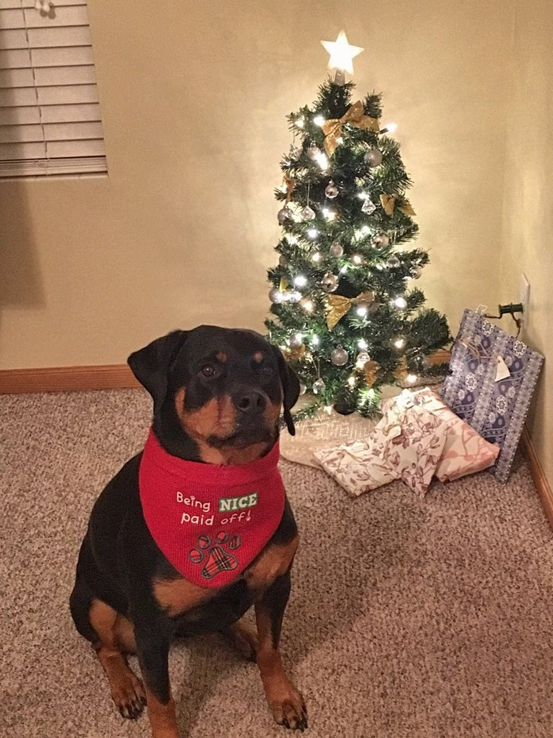 christmas,dogs,pets,christmas tree