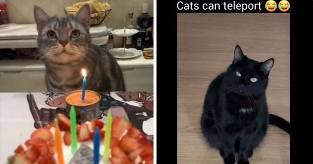instagram funny cats videos lol cat kittens aww cute adorable silly humor animals viral best top | birthday cat in front of a candle stuck in a tuna can | Cats can teleport black cat