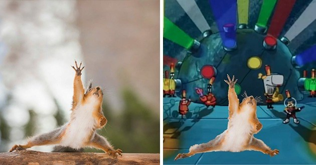 two funny photos side by side of a squirrel reaching for something in an awkward stance and on the right the same photo of the squirrel but taking the place of Spongebob squarepants in the Sweet Victory scene