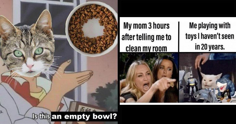 Funny random memes | Is this an empty bowl? is this a pigeon meme with a cat and a half full food bowl | My mom 3 hours after telling clean my room playing with toys haven't seen 20 years woman yelling at a cat