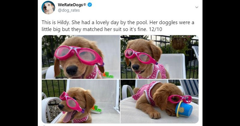 Funny and cute tweets from Twitter account We Rate Dogs | WeRateDogs dog_rates This is Hildy. She had lovely day by pool. Her doggles were little big but they matched her suit so 's fine. 12/10 adorable puppy in goggles