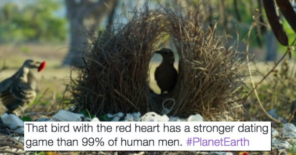 twitter planet earth birds romance - 1241349
