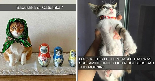 cats snaps cat snapchat funny lol aww cute adorable animals kittens kitties wholesome uplifting | Babushka or Catushka? cat with a handkerchief tied around its head like a russian grandma next to russian stacking dolls matryoshka | LOOK AT THIS LITTLE MIRACLE SCREAMING UNDER OUR NEIGHBORS CAR THIS MORNING