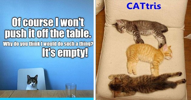 lolcats funny cat memes cats aww adorable wholesome original meme i can has cheezburger lol | course wont push off table. Why do think would do such thing s empty! | catris three kittens sleeping on top of each other like tetris pieces