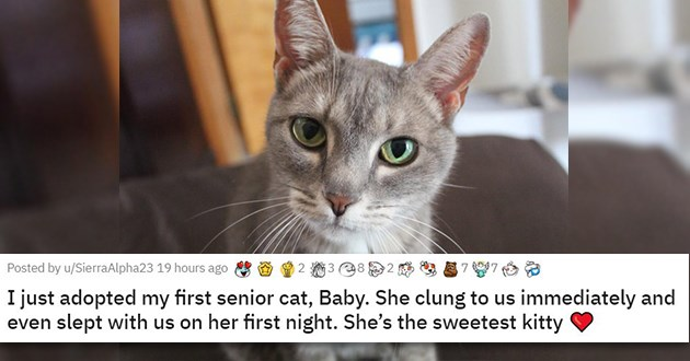 adopt adopted cats dogs shelter rescue kittens aww animals adorable cute wholesome uplifting forever homes | I just adopted my first senior cat, Baby. She clung to us immediately and even slept with us on her first night. She's the sweetest kitty