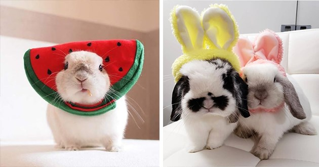 bunnies bunny costimes halloween aww cute adorable animals costume funny lol pics gifs | bunny wearing a watermelon shaped hat | two sweet bunnies wearing fuzzy fluffy bunny ears
