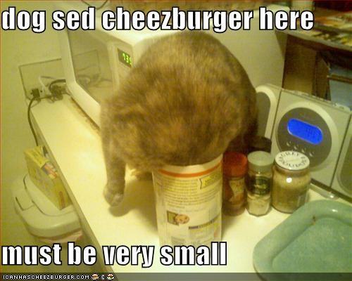 Cheezburger Image 1243178240