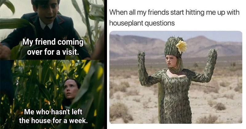 Funny memes about plants | My friend coming over visit. Cactus Jerk who hasn't left house week. Umbrella Academy Vanya Five | all my friends start hitting up with houseplant questions Splantsaremygirifeiend woman dressed like cactus