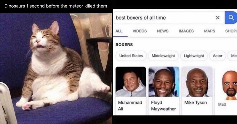 Funny random memes | Dinosaurs 1 second before meteor killed them chonky cat squinting | google best boxers all time ALL VIDEOS NEWS IMAGES MAPS SHOP BOXERS United States Middleweight Lightweight Actor Mike Tyson Floyd Mayweather Muhammad Matt Ali