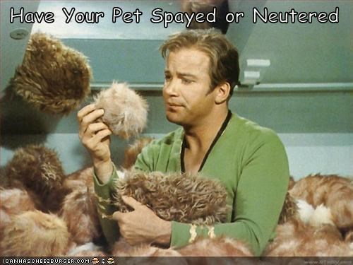 Captain Kirk sci fi Star Trek tribbles William Shatner - 1244025600