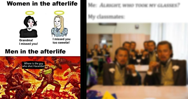 Funny dank memes from Reddit from the past week | Women afterlife Grandma missed missed too sweetie! Men afterlife Where is guy who shot Harambe? wojak comic | ALRIGHT WHO TOOK MY GLASSES? My classmates laughing Leonardo Dicaprio blurry