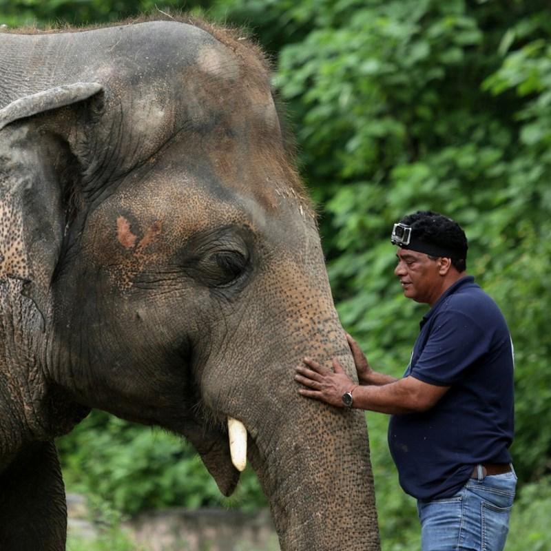 loneliness elephant zoo sanctuary released sad poor conditions lonely animals elephants cambodia news