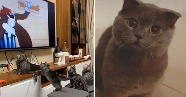 cats instagram videos funny cat lol aww animals adorable cute kitten wholesome humor lol | four kittens in different positions in front of a tv watching a cartoon about a cat | adorable cat with big perfectly round eyes