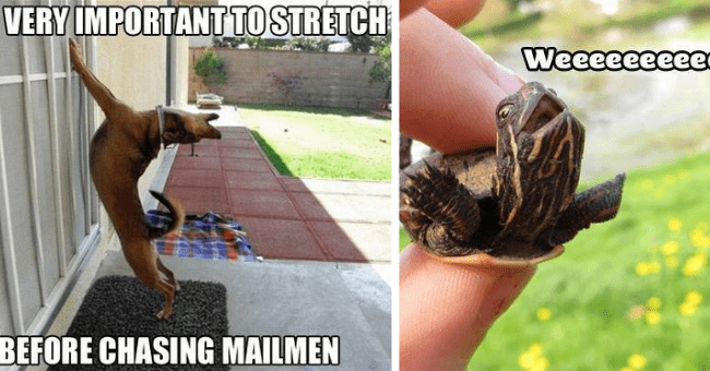 dogs cat dog meme funny cute hilarious turtle owl elephant giraffe alligator tumblr monkey fish memes pics | VERY IMPORTANT STRETCH BEFORE CHASING MAILMEN dog stretching against a wall | Weeeeeeeeee! cute excited looking turtle tortoise