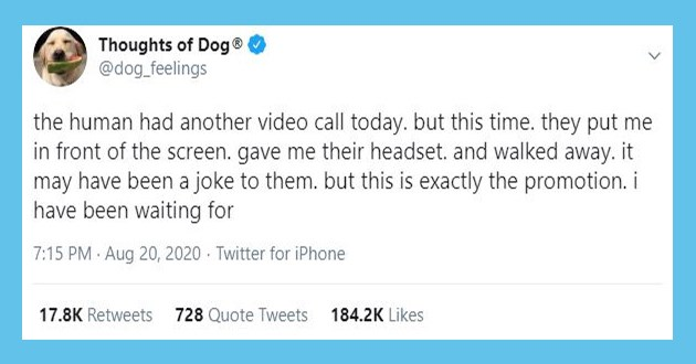wholesome thoughts dogs tweets funny lol aww animals adorable cute twitter uplifting | Thoughts Dog dog_feelings human had another video call today. but this time. they put front screen. gave their headset. and walked away may have been joke them. but this is exactly promotion have been waiting