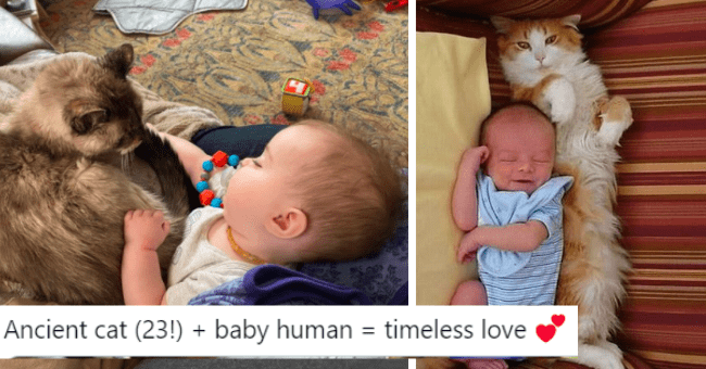 cats cat baby babies cute adorable wholesome kitty snuggle hug aww pics pictures | Jen Tidwell #BlackTransLivesMatter @neverheardofjen Ancient cat (23 baby human timeless love