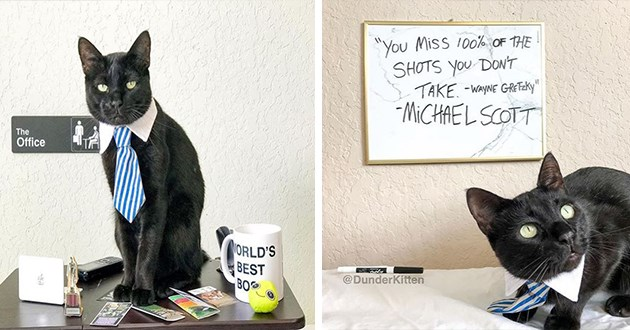 michael scott cats instagram cat dunder kitten mufflin the office lol funny spotlight cute aww animals | black cat in a necktie sitting on a table next to a mug that reads WORLD'S BEST BOSS inspirational quote You miss 100% of the shots you don't take Wayne Gretzky Michael Scott