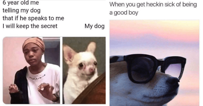 funny dank dog memes dogs doggo hilarious tumblr twitter pics pictures | 6 year old telling my dog if he speaks will keep secret My dog | get heckin sick being good boy @dabmoms dog in sunglasses