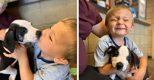 puppy boy adopted heartwarming wholesome story rescue animals tearjerker aww adorable perfect match pair best friends dog