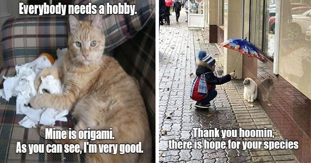 lolcats funny cats memes meme lol cat wholesome aww cute original ichc i can has cheezburger | Everybody needs hobby. Mine is origami. As can see very good. cat shredding toilet paper | Thank hoomin, there is hope species child holding umbrella over cat